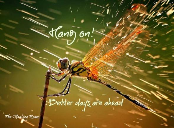 dragonfly better days